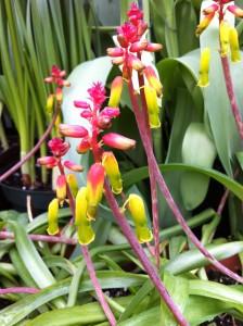 flower show 4